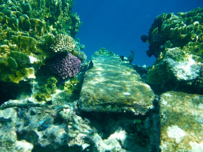 The coral reef is spectacular as it just drops off to into an abyss...