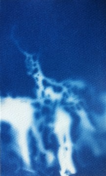 Stag (Night Vision), 2014, cyanotype, 3x5 inches