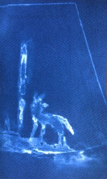 Wolf 2 (Night Vision), 2014, cyanotype, 3x5 inches