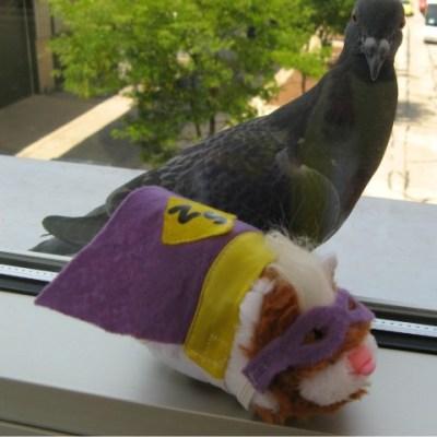 Zippy & CHA Pigeon Summer CHA 2011