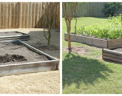 Garden Spring Plans – Give Me Green and a Nacho Garden