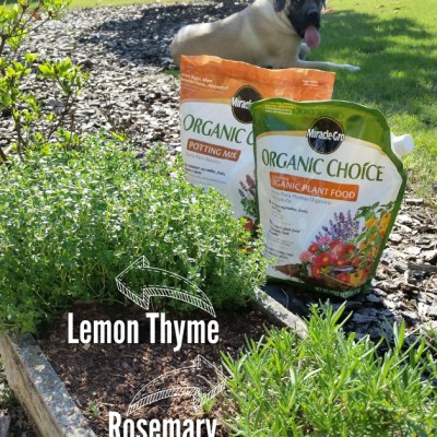 Rosemary & Thyme Butter Recipe from Our Herb Garden Plus a Garden Update