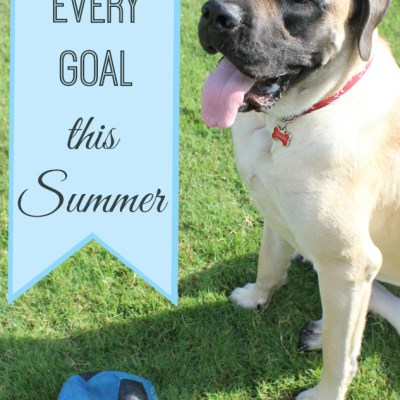 Summertime and the Celebration is Easy: Celebrate Every Goal This Summer