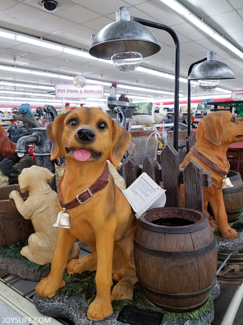 Dog light at Tractor Supply Co