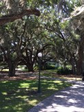 mossy tree courtyard
