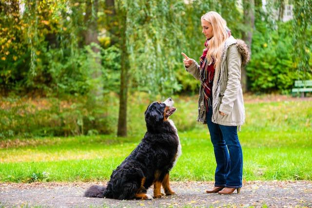 [반려] 밴쿠버 개들 사이에 치명적인 장염 바이러스 확산