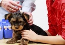 예방접종 강아지, CAHI
