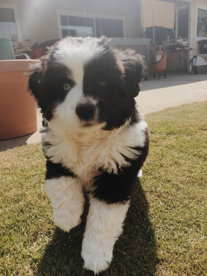 Reno, Dad's new pup