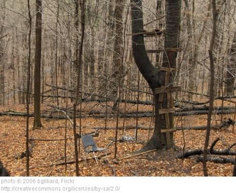 platform in a tree