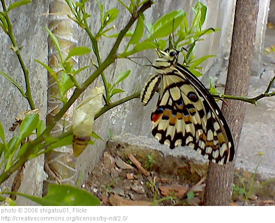butterfly out of cocoon