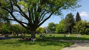 A park in Freiburg