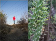 delta park view point and cactus