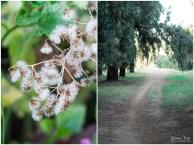 Delta park floral and fauna