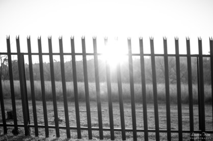 Black and White fence at Delta Park