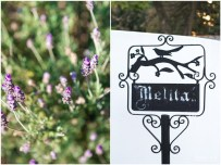 Lavender and a black sign