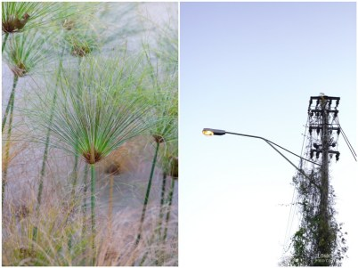 Reeds and a lamp post
