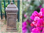 Iron Post Box and Pink Bouganvillia