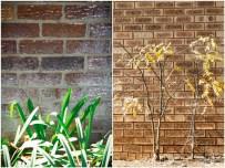 Face Brick Wall