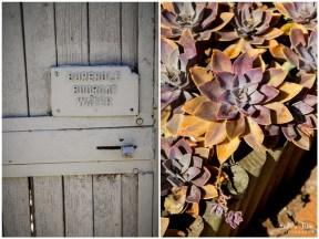 Borehole sign and orange succulents