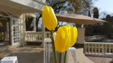 Summer Place Edward Chamberlain-Bell Radio Today Johannesburg Foodie DineJoziStyle (22)