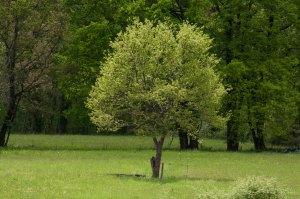 L'arbre solitaire - Haut Quercy - Bétaille - 2019
