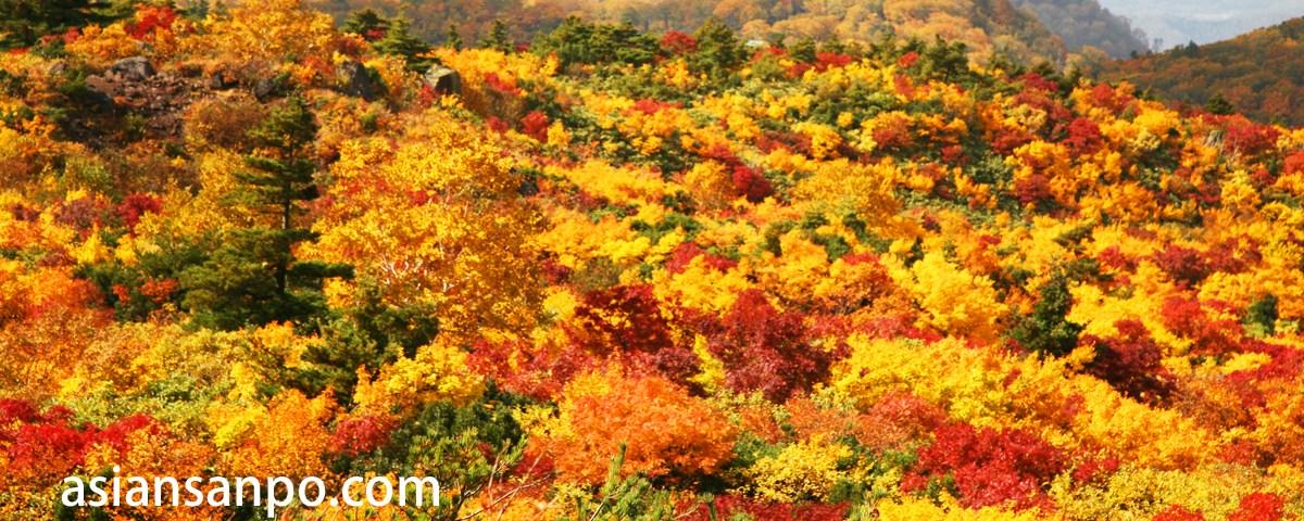 宮城 栗駒山の紅葉