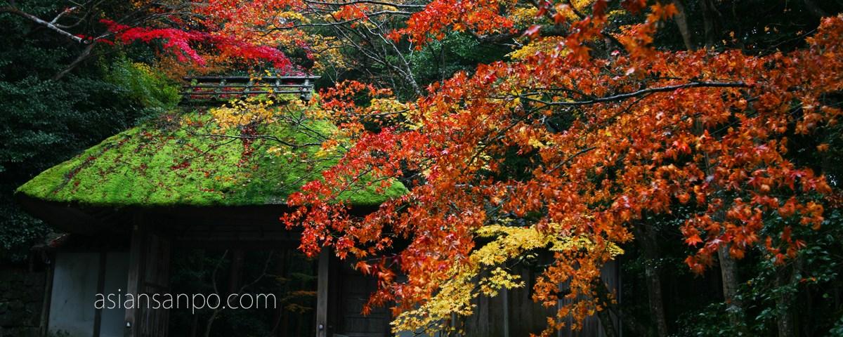 京都 法然院 紅葉