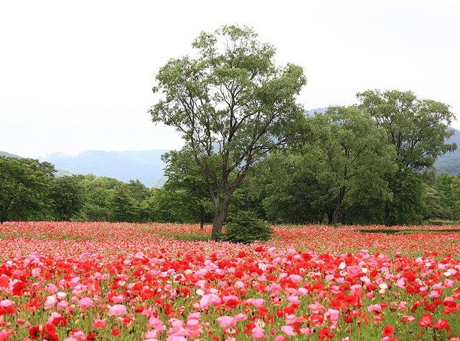 Photo by TANAKA Juuyoh (田中十洋) - View / 景色(けしき)(2009) / Size-adapted.