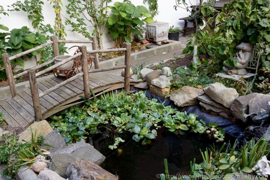 Bridget and Koi Pond of Harlem apartment in New York City