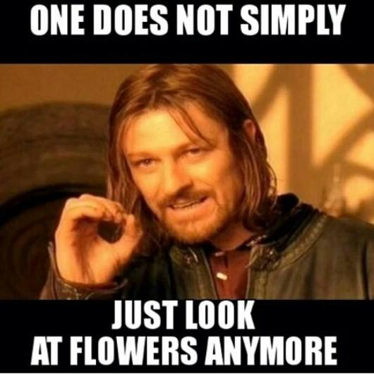 One does not simply just look at flowers anymore | JPEGY ...