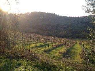 Vineyard views....