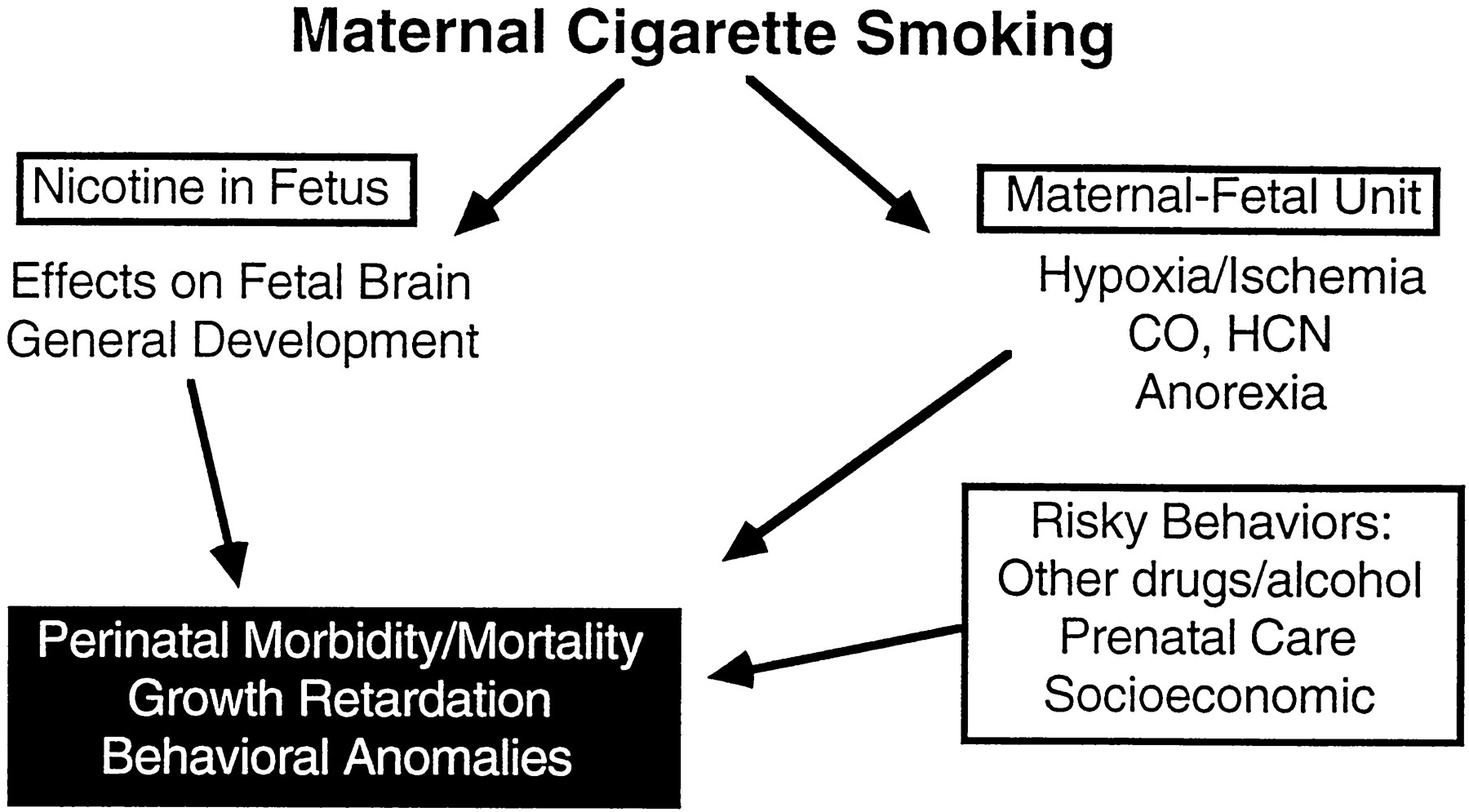 Fetal Nicotine Or Exposure Which One Is Worse