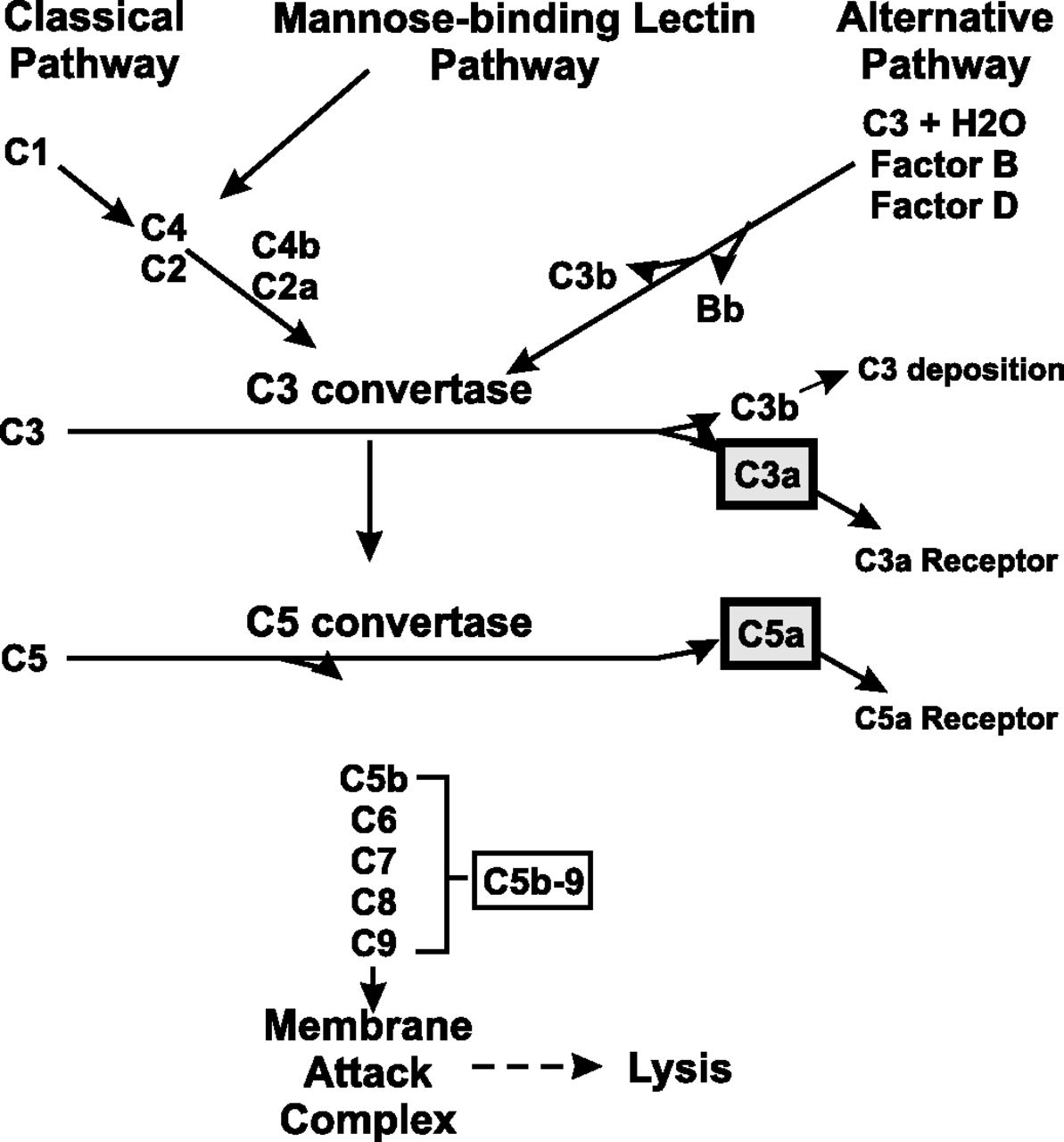 Differential Effects Of Complement Activation Products C3a