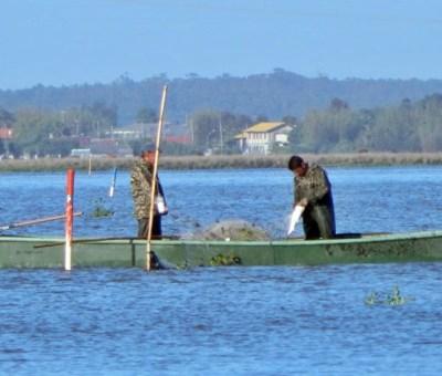Pesca tramandai