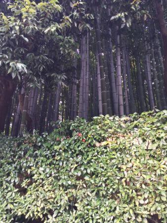 京都 大徳寺 玉林院の月釜