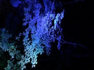 下鴨神社ライトアップ4