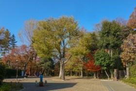 林試の森公園