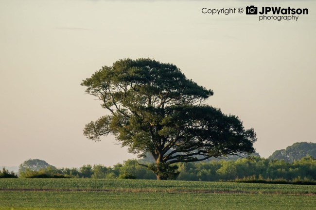 Tree In The Sunshine In North Yorkshire