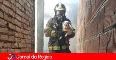 Cachorro é resgatado de casa em chamas