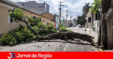 Parte de árvore cai e bloqueia rua na Vila Arens
