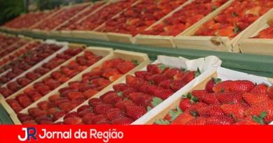 Festa do Morango continua neste domingo em Jarinu