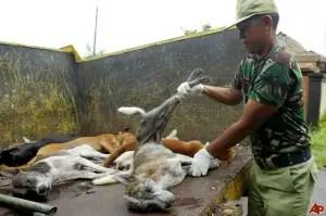 indonesia-bali-rabies-outbreak-2009-2-4-5-33-40