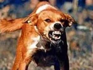 rabies_dog_bite