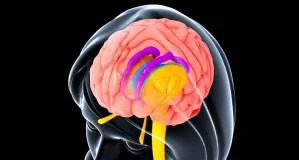 121015_ls_brain-shapes_free