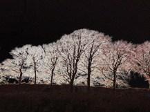 Trees, oriental art, pink trees, photo manipulation, graphic design, oriental trees,
