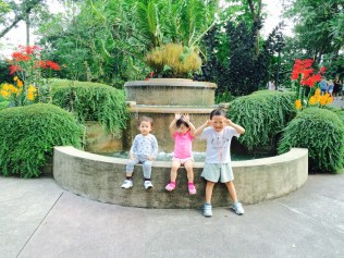 Tiger Orchid Fountain