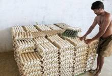 Additional drop in egg worth in Namakkal