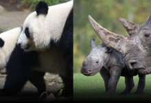 Chinese Scientists Title 44 Animals At possibility of COVID-19