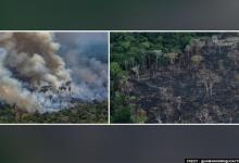 The tipping point: Amazon deforestation rose 17 per cent in 2020, data shows