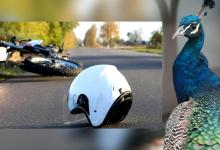 34-year-old man peacock he crashed his bike into both die in Keralas Thrissur